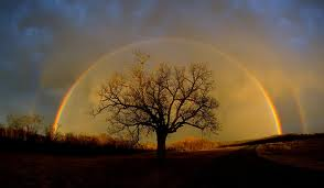 rainbow (Elm tree)