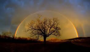 rainbow (Elm tree)